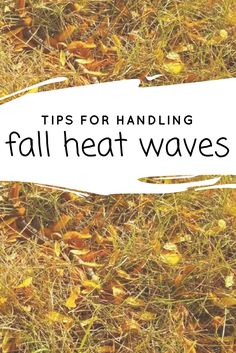 Are you dealing with this fall heat wave? Learn what to do in your lawn during fall drought conditions.