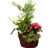 El kalanchoe una planta fácil de cultivar y cuidad.