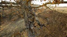 Bow Hunting Wallpaper Mossy Oak Camo