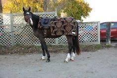 Custom Unique 1/4 Sheets- covers rider too~ https://www.theponyhabit.com/hansen-equestrian-.html
