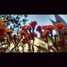 Plantas, flores naturales, brote