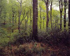 Bøgeskove på morbund med kristtorn. Atlantiske bøgeskove på surbund med Ilex og til tider også Taxus i busklaget (Quercion robori-petraeae eller Ilici-Fagenion).  Gammel bøgeskov med kristtorn i forgrunden. Velling Skov, Midtjylland. Foto: Bert Wiklund.  Bøgeskove på morbund omfatter skovpartier, hvor bøg er det dominerende træ, og hvor jordbunden er sur, og der har fundet morbundsdannelse sted. Bøgeskov på morbund opdeles udfra mængden af naturlig kristtorn i 2 forskellige typer. Se…