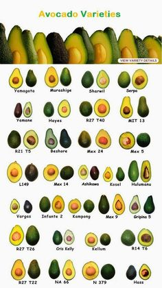 Small Business Ideas | List Of Small Business Ideas: Avocado Farming Business | How to Grow Avocados for Profit | Growing Avocado