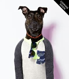 The American Beagle Outfitters Look Book Is a Dog Lover's Dream I Love Dogs, Cute Dogs, Cute Dog Clothes, Matching Clothes, American Beagle, Animal Projects, Woodland Creatures, Dog Photography, Mens Outfitters