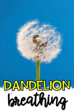 """Add these Dandelion Deep Breathing Visual Tools to your classroom calming corner! Students will take deep calming breaths with the support of these dandelion visuals and cue cards. Add these visual and """"touch points"""" to a calming corner to support counting back from 5 to 1 while taking deep breaths. #calmingstrategies #calmdowncorner #behavior"""
