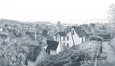 The Rooftops of St Ives, Drawings- Alice Hole, Alice Hole, SAA Professional Members' Galleries