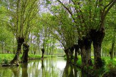 Le Marais Poitevin : Dédale de voies d'eau où la lumière perce au milieu des frênes, saules et autres peupliers, le Marais Poitevin offre l'image d'une nature authentique et d'un écosystème fragile.
