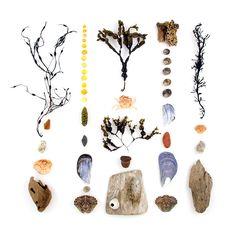 Beachcombing series from Quercus Design.