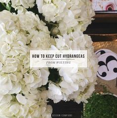 how-to-keep-cut-hydrangeas-from-wilting