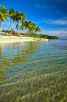 Tropical beach with clear waters.