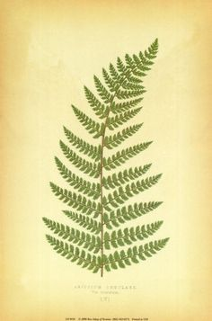 fern prints...maybe with book pages behind