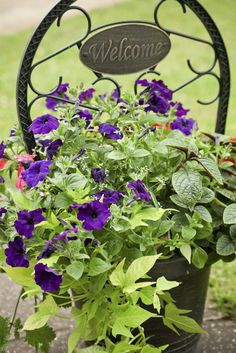Container Grown Vine Plants: Tips For Growing Vines In Containers //   Vines are a fantastic addition to the garden. They can be trained up nearly any structure to draw attention to a wall or distract from an unsightly area. They are also very versatile in that they can be grown easily in containers. Click here to learn more.