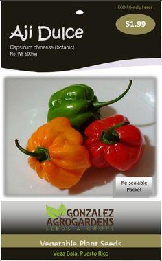 Sweet Pepper Capsicum chinense Aji Dulce Ajicito Cachucha 100 seeds