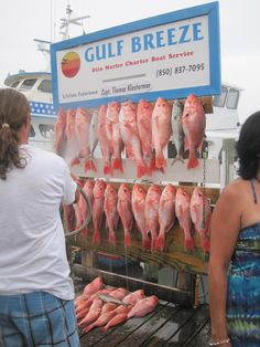 Florida Discoveries Destin Deep Sea Fishing Trip – Ground Control to Major Mom Fishing Life, Sport Fishing, Fishing Shoes, Seaside Florida, Gulf Breeze, Charter Boat, Fishing Charters, Deep Sea Fishing, Saltwater Fishing