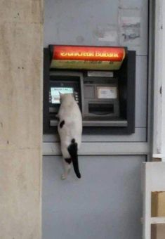 We Can't Really Explain These Bizarre Animal Photos - World's largest collection of cat memes and other animals Bizarre Animals, Funny Animals, Cute Animals, Animals Images, Crazy Cat Lady, Crazy Cats, Gatos Cool, Tier Fotos, Funny Animal Pictures