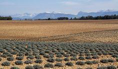 En pointillé de YANKA est la Photo du Jour! - https://fotoloco.fr/photo-detail/?id=141069 - Au fond, les Alpes fotoloco.fr: Cours Photo gratuits et Concours Photos.  Une communaute de 27,000 passionnes!