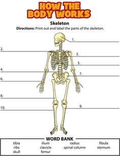 build a body interactive activity Whack-a-bone description: whack-a-bone will lead you toward an instinctive knowledge of the major bones of the body build up.