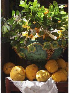 Huele a azahar, ¡son limones!