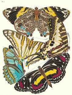 EA Seguy  Butterfly Print  1928
