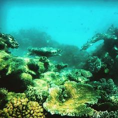 #greatbarrierreef #queensland #australia #cairns #diving #coral #reef by trickytravels http://ift.tt/1UokkV2