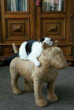 Bullies are for everyone!! #catsdiyscratcher
