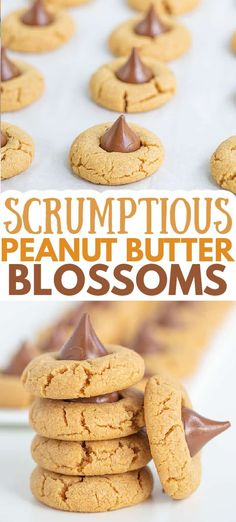 Easy Peanut Butter Blossoms - These are the best Peanut Butter Blossoms! They're made with butter, loads of peanut butter, and the perfect balance of brown sugar and granulated sugar. Pop a chocolate kiss in the center and they're ready for serving! This is the Hershey Kiss Cookie recipe that you have to try! #cookiedoughandovenmitt #peanutbutter #cookies #dessert