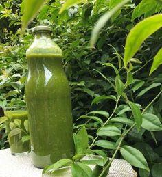 Ora-Pro-Nobis - nesta planta está a solução de pra queserveestaplantamuitas doenças.
