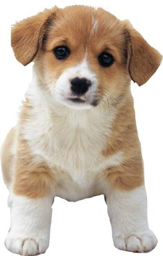 Top Quality Puppies!We Provide Top Quality Puppies That Are From Top Quality Breeders!