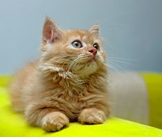 Cats have a reputation for being untrainable, but they're smart enough to learn good behavior. Vetstreet trainer Mikkel Becker has 5 tips on training kittens.