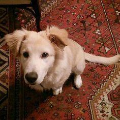 Ma ciao nuovo amico  Foto di: @la_rosy_gio #BauSocial   #dog #dogs #dogoftheday #dogofinstagram #dogstagram #pet #petsagram #pets #puppy  #friend #friends #friendship #petoftheday #vsco #vscocam #nofilter #white #cane #instadog #instamood #photooftheday #igers #igersoftheday #cutie #happy_pet #ilovemypet #kitten #可爱 #够