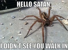 Spiders are evil!