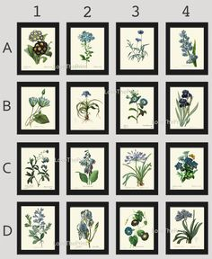 Botanical Print Set of 16 Antique Beautiful Redoute Blue Flowers Iris Plumbaqgo Primula Gentian Butterfly Plants French Garden Nature Home Room Decor Wall Art Unframed. Beautiful set of 16 prints based on antique botanical illustrations from 1802. Wonderful details, colors and natural history feel. • The prints measure 4x6, 5x7, 8x10, or 11x14 inch. based on your selection come with a white border for easy framing. • Printed on professional artist archival matte paper. • The prints are…