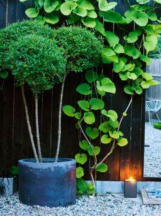 växterna mot svart fasad