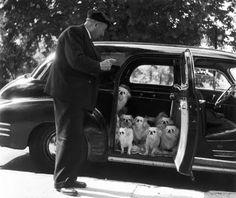 Robert Doisneau photo. Love his work.