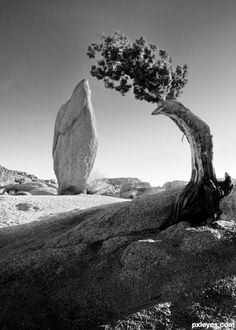 Ansel Adams Photography - Ansel Adams ( 1902 - 1984 ) More At FOSTERGINGER @ Pinterest