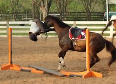 From Horse Nation; Bad Jumping Clinic with George Morris... Next week I am doing a clinic with him... scared!!!