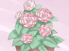 How+to+Care+for+a+Begonia+--+via+wikiHow.com