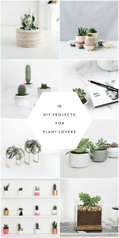 10 DIY projects for plant lovers. A round up of the best diy projects to bring plants into your home. Various cactus, succulents, and small house plants are included.