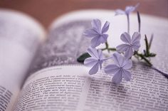 booklover:  {Living for the moment} on vi.sualize.us