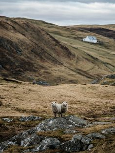 Shetland Islands, Scotland by Alex and Nastya
