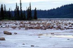 Wood Buffalo National Park, Alberta & Northwest Territories -Canada