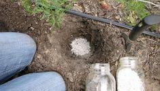 Cum fertilizam corect solul in gradina sau livada, ce ingrasaminte trebuie sa folosim, care este rolul elementelor nutritive, cand si cum administrezi ingrasamintele organice