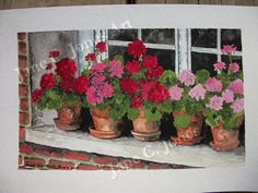images geranium pot water colours - Google Search