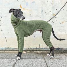 Italian Greyhound Clothing Fleece Long sleeves T-shirt Italian Greyhound, Diy Stuffed Animals, Dinosaur Stuffed Animal, New Puppy Checklist, Grey Hound Dog, Dog Sweaters, Overall, Dog Pictures, Fur Babies