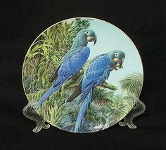 """Here we have a most gorgeous plate from the Olde Country, featuring a pair of Lears Macaw having an afternoon snack. They are perched on a plate that was made in  the 1990's by Wedgwood as part of ther """"Fragile Paradise"""" collection"""
