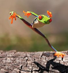 Leap Kung Fu frog
