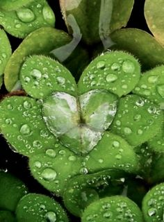 Pictures of nature. Photos of heart nature. Dew Drops, Rain Drops, Water Drops, Romantic Nature, Romantic Mood, Romantic Travel, Heart In Nature, Nature Nature, Nature Pics
