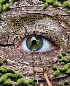 'The real voyage of discovery consists not in seeking new landscapes but in having new eyes. Pretty Eyes, Cool Eyes, Beautiful Eyes, Beautiful Things, Eyes Without A Face, Look Into My Eyes, Formation Photo, Eye Images, Image Citation