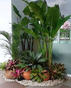 Spesialis Tukang Taman Surabaya dan Desain Taman - Jasa Tukang Taman Surabaya | 081232873316 Front Yard Garden Design, Garden Yard Ideas, Backyard Garden Design, Garden Landscape Design, Garden Projects, Dry Garden, Bali Garden, Balinese Garden, Tropical Backyard Landscaping