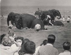 Elephants in Rhyl! - holidaymakers in Rhyl had a shock when a herd of elephants from Billy Smart's circus cooled off in the sea in July 1970.